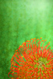 Abstract Flower Background Stock Photography