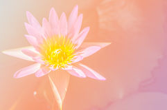 Abstract flower background with flower color pink filters.  stock images