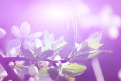 Abstract flower background. Royalty Free Stock Photo