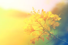 Abstract flower background. flowers made with color filters Royalty Free Stock Photography