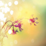 Abstract flower background. flowers made with color filters Royalty Free Stock Photos