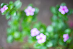 Abstract flower blur background Royalty Free Stock Photos