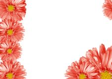 Abstract flower border Stock Images