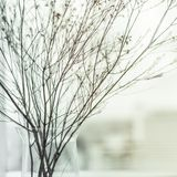 Abstract flower branch. Winter  background Stock Photography