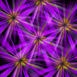 Abstract Flower Bursts Stock Image