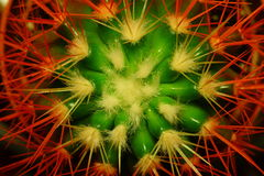 Abstract flower of a cactus Stock Image
