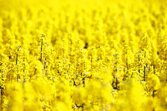 Abstract flower carpet Royalty Free Stock Image
