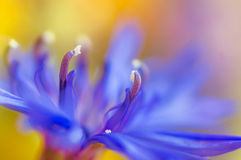 Abstract flower closeup with soft focus Royalty Free Stock Photos