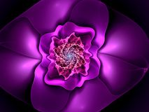 Abstract flower fractal shape Royalty Free Stock Photos