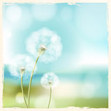Abstract flower  dandelion Stock Photos