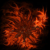 Abstract flower in flames on black background. Abstract computer generated picutre of fire and flames, flower in center Stock Photos