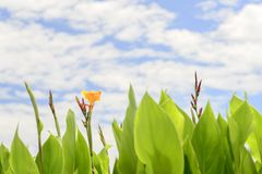 Abstract flower ,Flower of Canna indica stock images