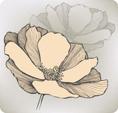 Abstract flower, hand-drawing. Vector illustration Stock Photo