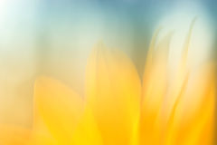 Abstract flower. Image of abstract flower background. Blur Royalty Free Stock Image