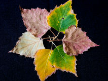 Abstract flower made of colorful autumn leaves Royalty Free Stock Images