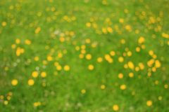 Abstract flower meadow Stock Images