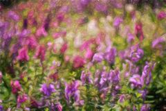 Abstract flower oil painting / photo art effect Stock Photo