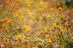 Abstract flower oil painting / photo art effect Stock Image