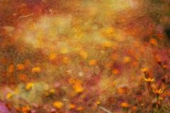 Abstract flower oil painting / photo art effect Stock Photos