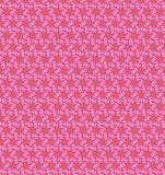 Abstract flower pink color pattern  background Royalty Free Stock Photos