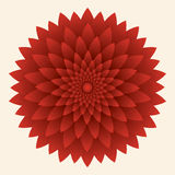 Abstract flower, red chrysanthemum. Vector  illustration Royalty Free Stock Image