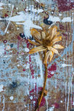 Abstract flower splatter grunge. Decaying flower on dried paint splatter grunge background Royalty Free Stock Photo