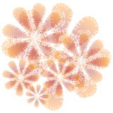 Abstract Flower Texture Peach Stock Photos