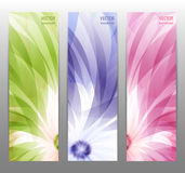 Abstract Flower Vector Background / Brochure Template / Banner. Royalty Free Stock Image