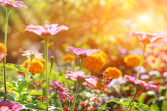 Abstract flowerbed on sunny day stock photos