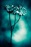 Abstract flowers. Crossprocessed - tried to achieve a moody ambience Royalty Free Stock Photos