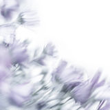 Fine art flowers Royalty Free Stock Photography