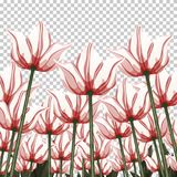 Abstract flowers, bottom view on a transparent backdrop, vector illustration, colorful drawing. Drawn white red buds, petals and s Stock Photography