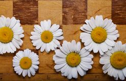 Abstract flowers chessboard Stock Photo