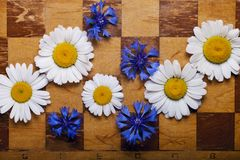 Abstract flowers chessboard Stock Photos