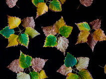 Abstract flowers made of colorful autumn leaves Royalty Free Stock Images