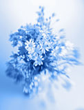 Abstract flowers in vase. In blue tone - shallow DOF with Lensbaby Stock Photos
