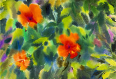 Abstract flowers watercolor original painting colorful of chinese rose flower Stock Images