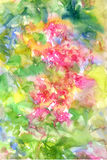 Abstract flowers watercolor painting. Spring multicolored. Flowers Royalty Free Stock Images