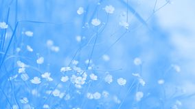 Abstract flowery background blue Stock Images