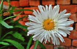 Abstract Fluffy Daisy Stock Images