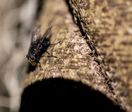 Abstract Fly on a Log Stock Image