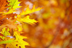 Abstract foliage background, beautiful tree branch in autumn Stock Photography