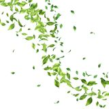 Green Flying Leaves. Abstract foliage background. Green flying Leaves on white background Stock Image