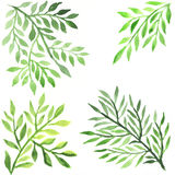 Abstract foliate watercolor paintings stock illustration
