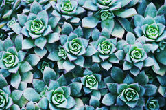 Abstract Foral Background Stock Photo