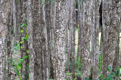 Abstract forest Stock Image
