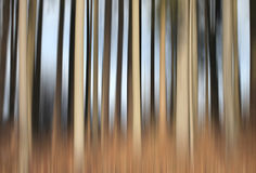 Abstract forest Stock Photography