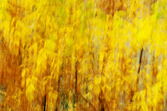 Abstract Forest autumn colors Stock Image