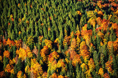 Abstract Forest autumn colors Royalty Free Stock Photos