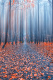Abstract forest in autumn time Stock Photography